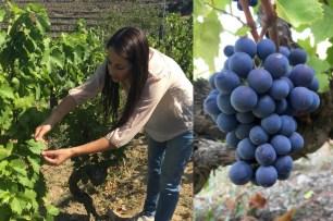 Nacional Vineyard, Quinta do Noval