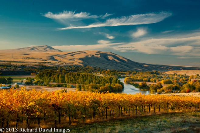 Washington wine country harvest, Richard Duval