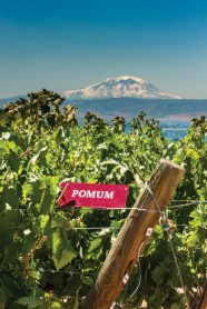 Pomum Cellars vineyard block