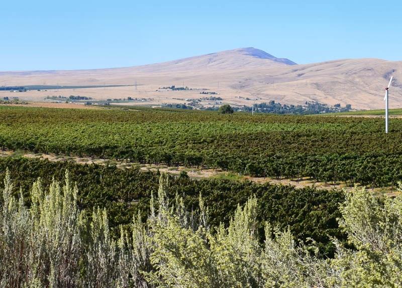 Kiona Vineyards, Red Mountain