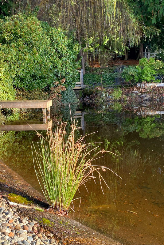 Pond at Chateau Lill, Woodinville, WA