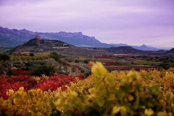 otoño Vivanco