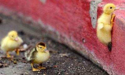 Как да възпитате в детето упоритост, търпение и воля: 7 съвета от психолог