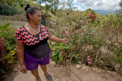 A woman shares the medicinal plants in her garden that she uses to treat illnesses in her community. Image: WNV/Jeff Abbott
