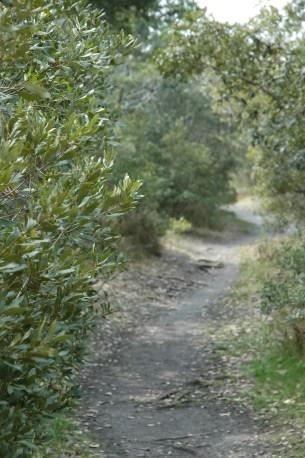 Springer's Point Trail