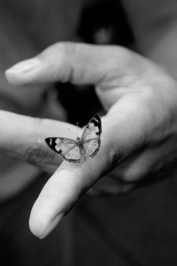butterflyonfinger