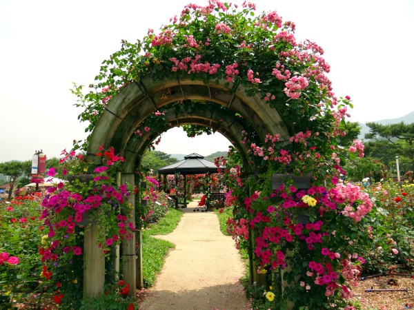 rose garden Seoul Rose Garden Festival | Deceptively Blonde