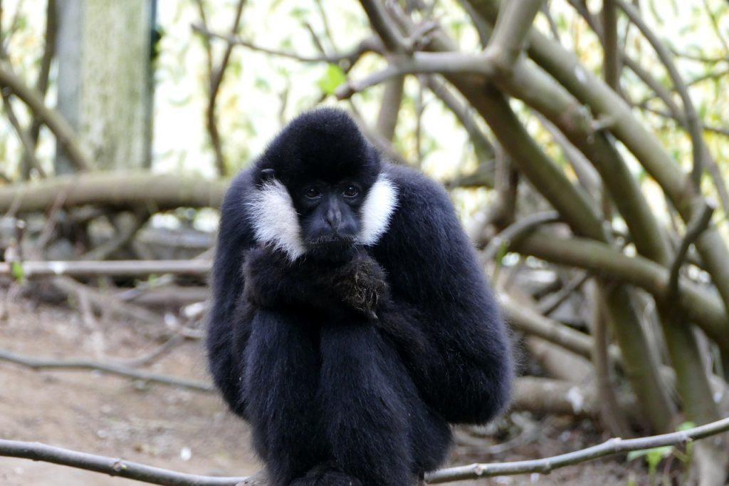 Mono en una postura de sumisión