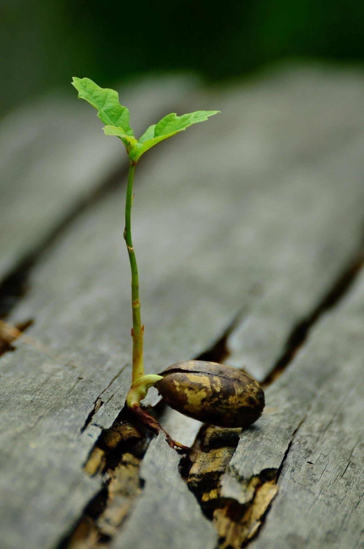 Semilla germinando como nuevas ideas