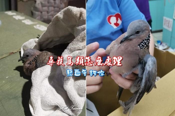 【急難救助】撿到鳥類該怎麼辦?第一時間你該這麼做!