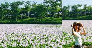【台南景點】仁德區即將消失的紫色花海,錯過這次就不再:港尾溝溪滯洪池
