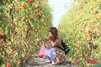【台南親子體驗】台南夢幻番茄園,現採現吃不用錢~最適合親子共遊的採果樂:夢幻團長鹽地番茄園