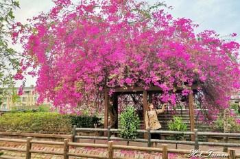 【台南景點】新化南圳綠堤公園:台南的萊茵河畔,九重葛紅花亭盛開中