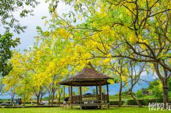 【台南景點】新化虎頭埤阿勃勒五個拍攝點,拍下屬於你的浪漫黃金花海