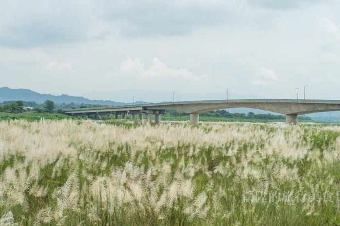 【台南景點】初秋最美的一幅畫,大內橋下的甜根子草花海!