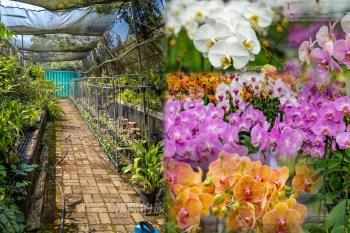 【台南景點】台南隱藏版賞花小秘境,竟然還可以跟超過2000朵蘭花共進午餐~