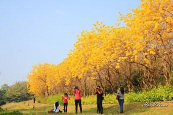 【台南安平】黃金風鈴炫麗大盛開~讓人彷彿置身國外場景的美!!