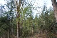 Many Trees