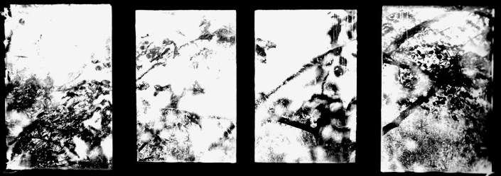 Baie de l'atelier, Aveyron, noir et blanc argentique, Jean-Pierre Devals