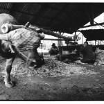 Pressage des cannes, Asie, noir et blanc argentique, Jean-Pierre Devals