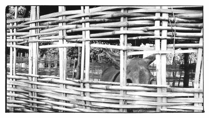 État d'âne