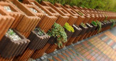 Ogród wertykalny na zewnątrz – jak założyć?