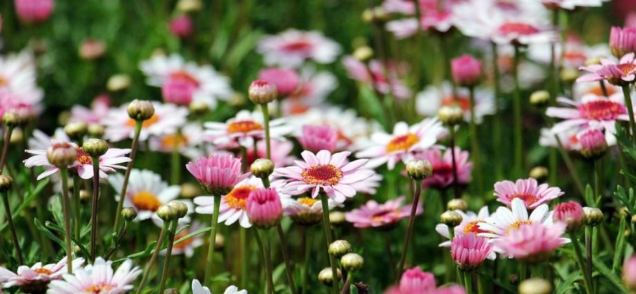 Jak przygotować ogród do jesieni?