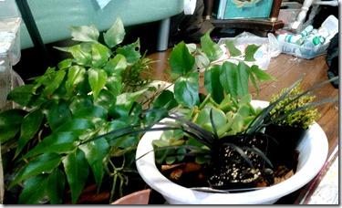 幻想テラリウム構想中植物2