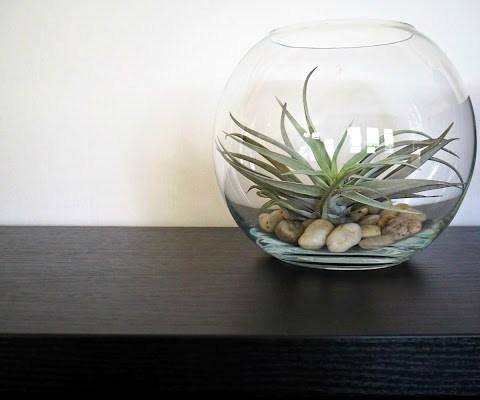 Ihanat ilmakasvit – vinkit kasvien hoitoon.