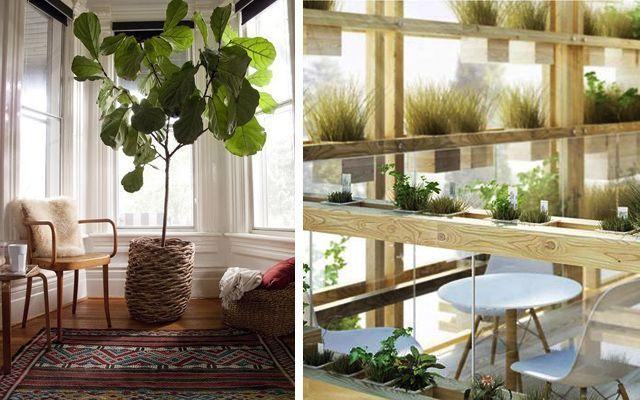 Bitkilerle süslemek için fikirler
