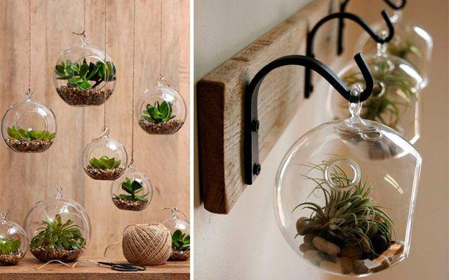 Kitchen_plants_06