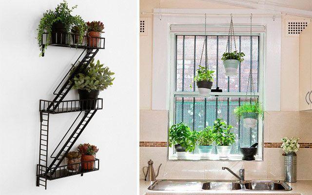 Kitchen_plants_10