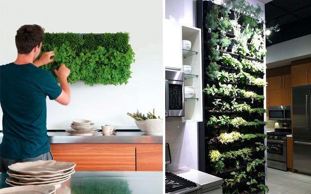 Kitchen_plants_12