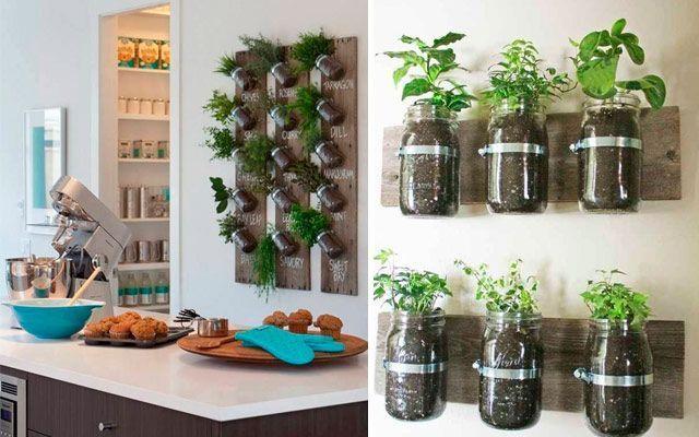 Kitchen_plants_13