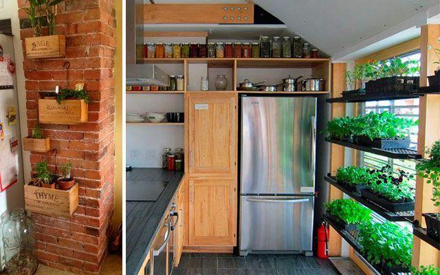 Kitchen_plants_16