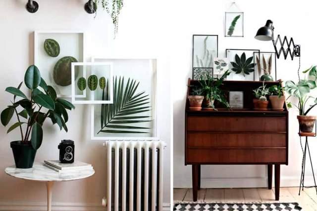 Botanik Ev Dekorasyonu