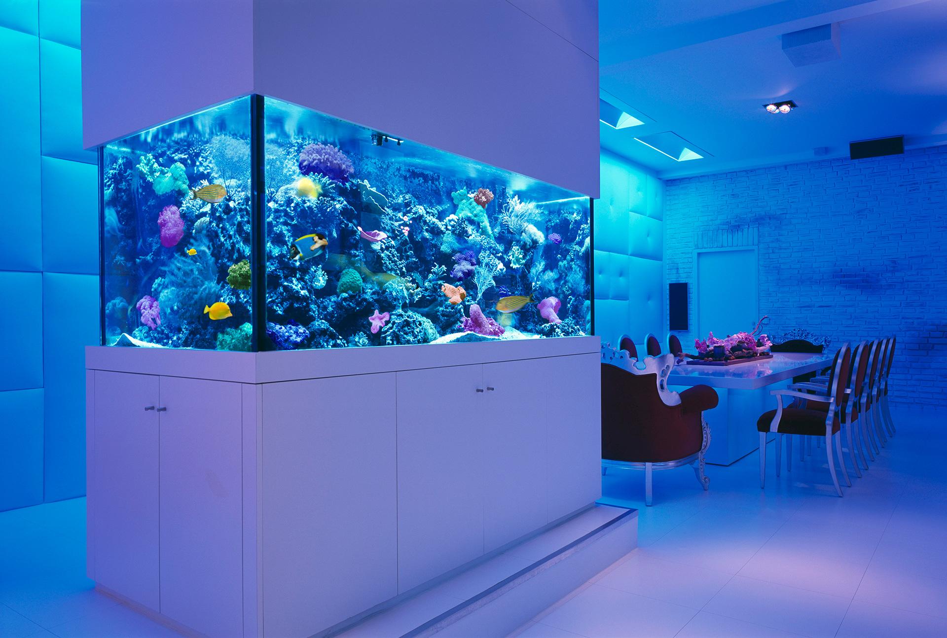 Design Interior Aquarium