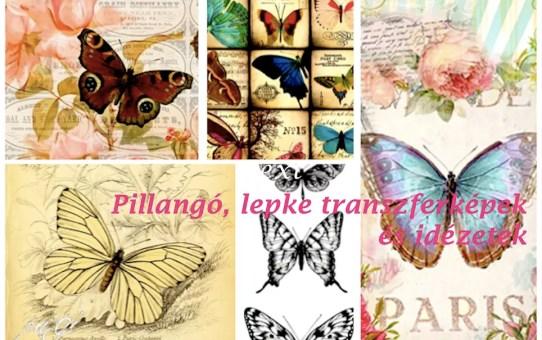 Pillangó, butterfly - transzfer képek, idézetek, érdekességek 1.