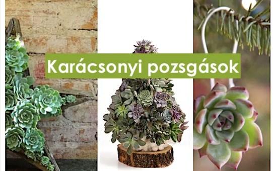 19 nagyon szép karácsonyi ötlet pozsgás növényekkel