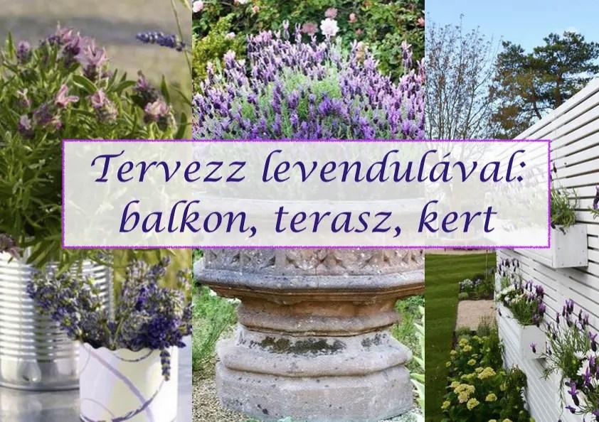Tervezz levendulával - balkon, terasz, kert
