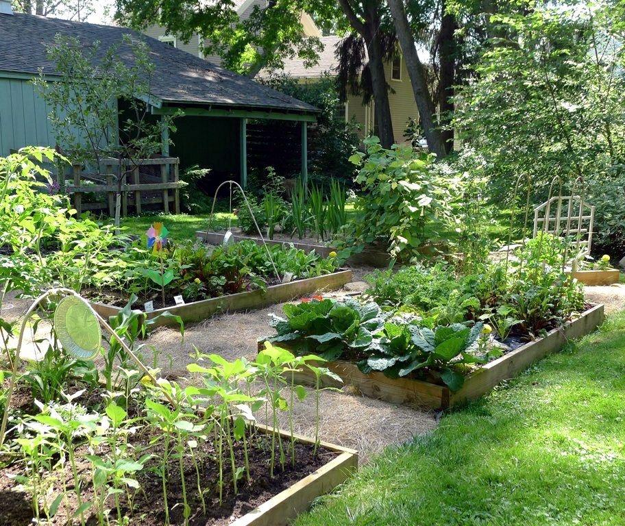 огород с ящиками для растений