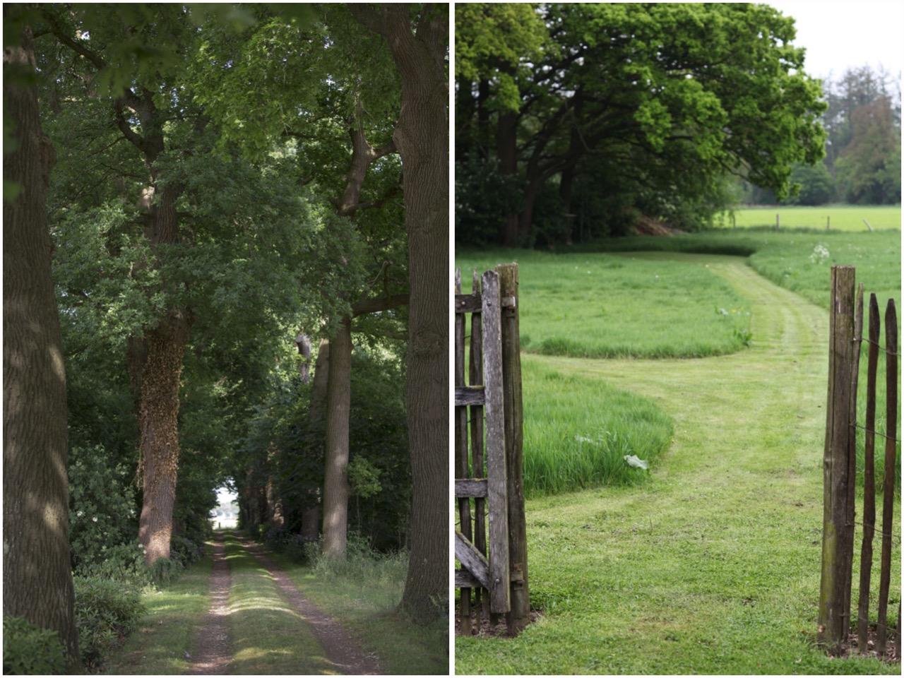 загородный дом дорожка деревья ландшафт