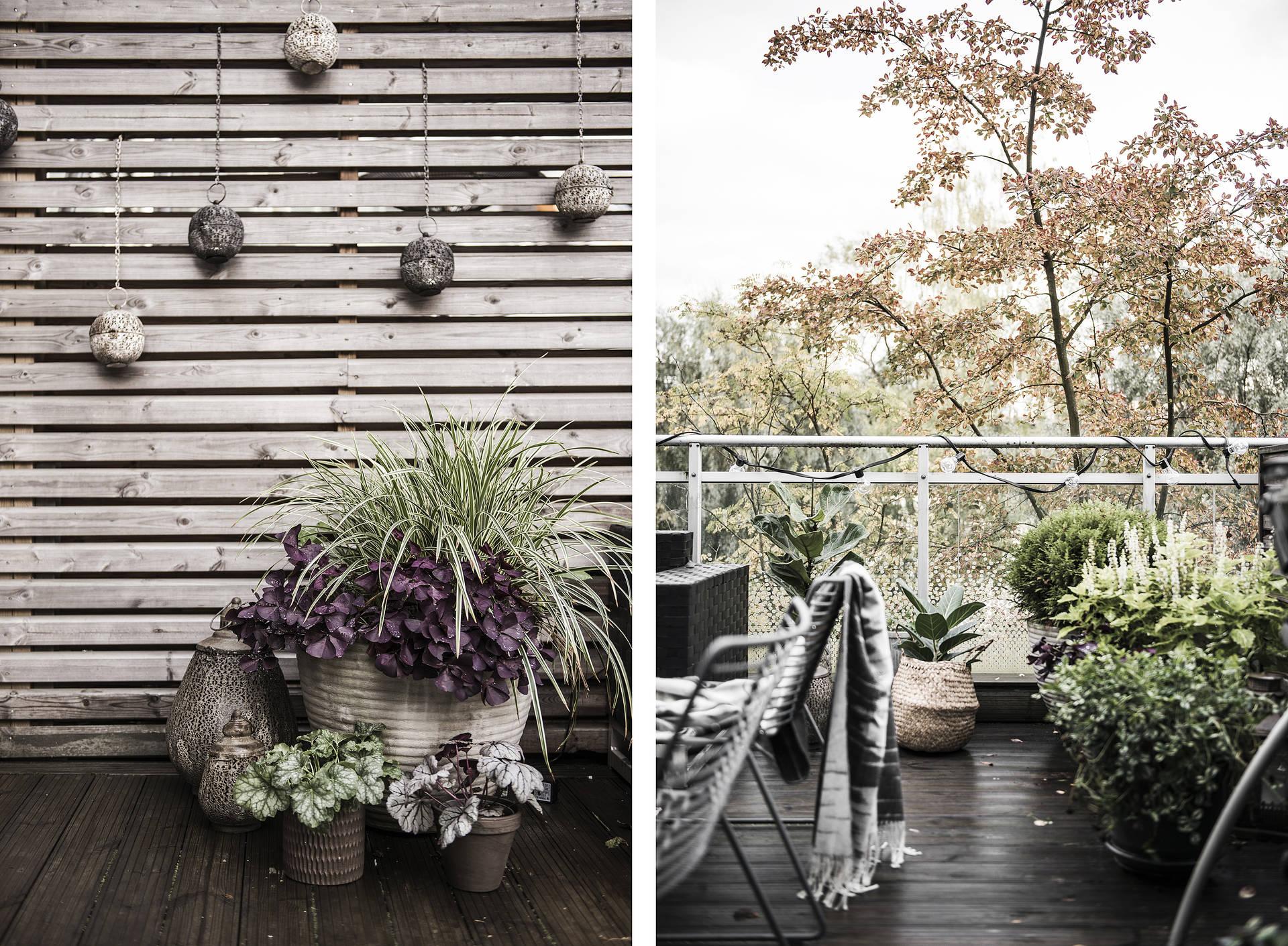деревянный забор терраса кашпо растения