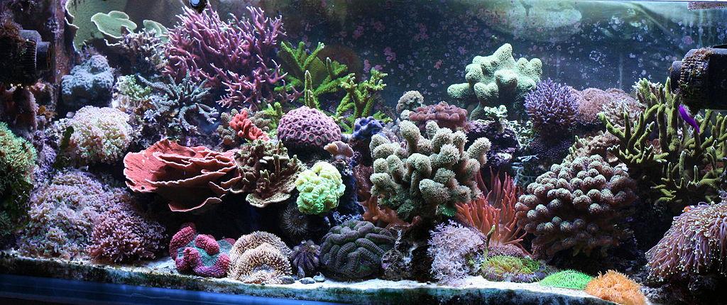 aquascape beginner plants