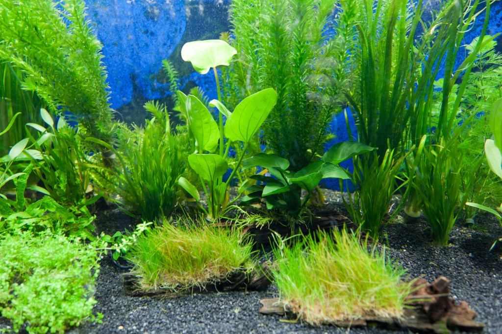 aquascaping for beginners uk