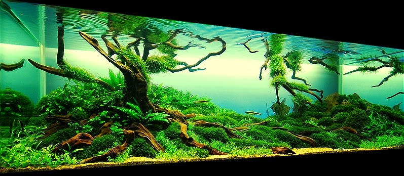 aquascaping guide for beginners