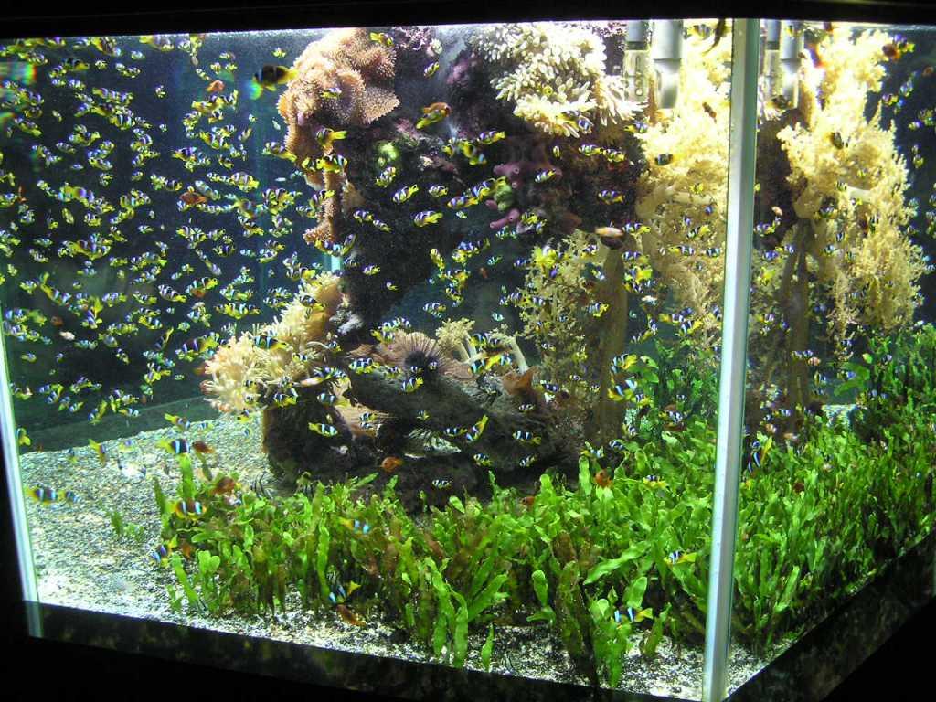hardscape for aquarium