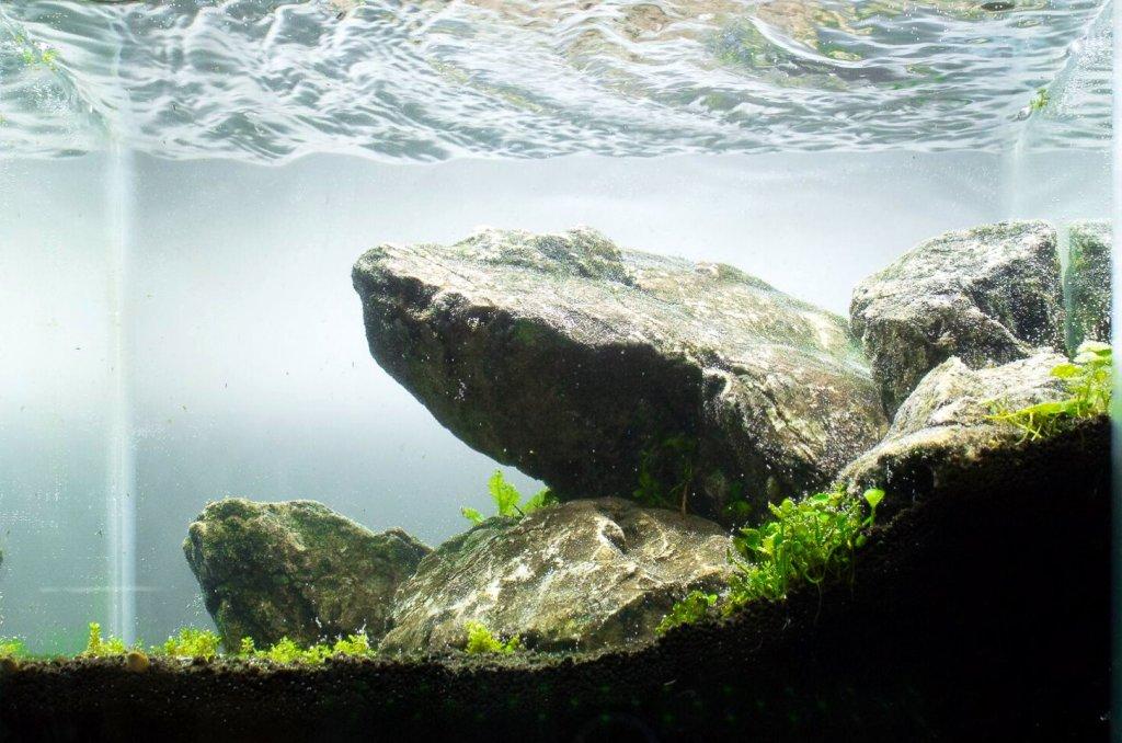 hardscape freshwater aquarium