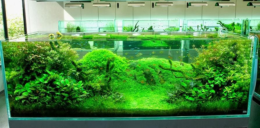 how to hardscape aquarium
