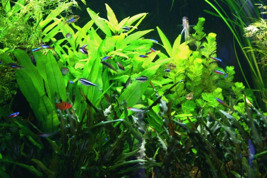 nature aquarium 10 gallon aquascape